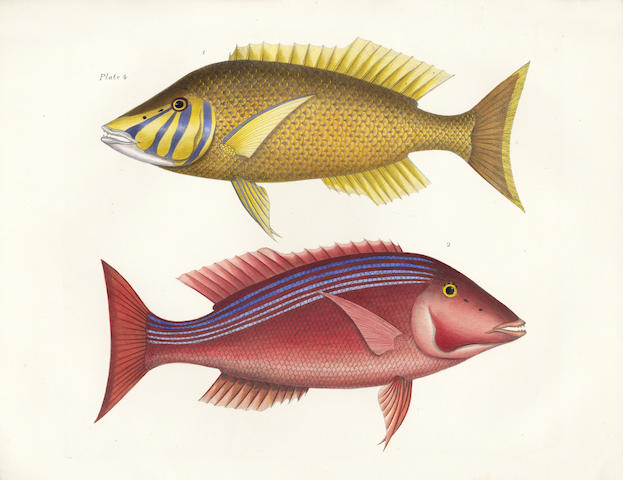 RICHARDSON (JOHN) Icones Piscium or Plates of Rare Fishes, Part I [all published], 1843