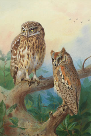 Archibald Thorburn (British, 1860-1935) Little Owl and Scops Owl