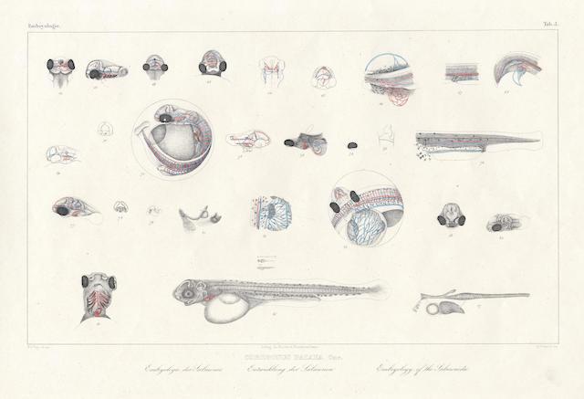 AGASSIZ (LOUIS) Histoire naturelle des poissons d'eau douce de l'Europe centrale... Embryologie des salmones. Par G. Vogt, one part only, 1842