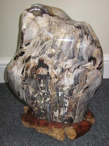 Two polished petrified wood specimens