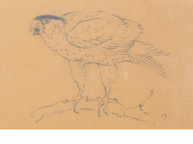 Archibald Thorburn (British, 1860-1935) Sketches of birds of prey one 10 x 14cm (3 15/16 x 5 1/2in) and the other 9.5 x 14cm (3 3/4 x 5 1/2in).