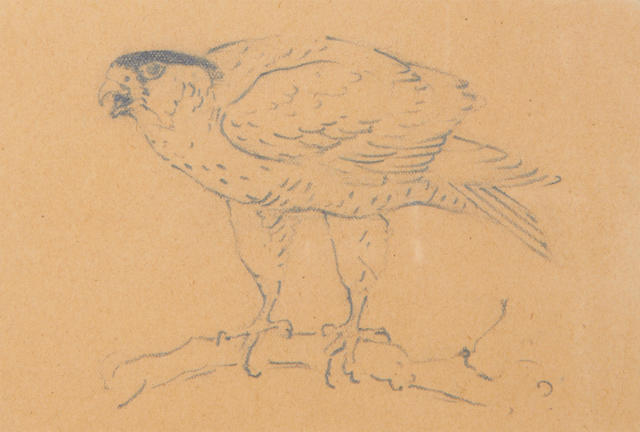 Archibald Thorburn (British, 1860-1935) Sketches of birds of prey one 10 x 14cm (3 15/16 x 5 1/2in) and the other 9.5 x 14cm (3 3/4 x 5 1/2in).