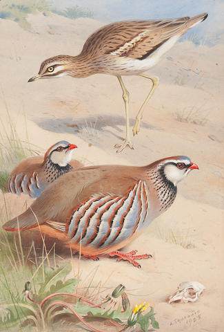 Archibald Thorburn (British, 1860-1935) Stone Curlew and Red Legged Partridge