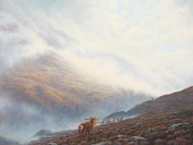 Ian MacGillivray (British, born 1964) Rutting Deer