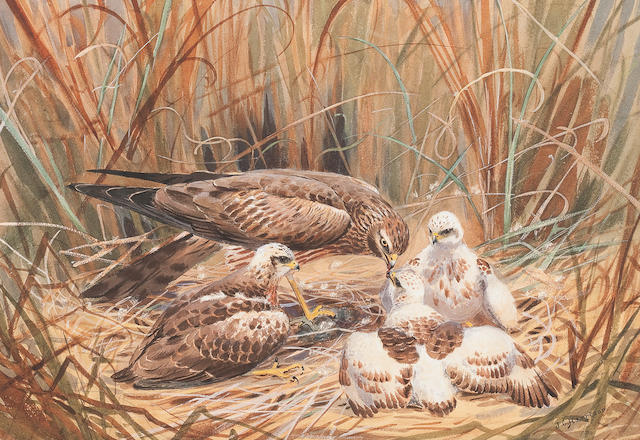 John Cyril Harrison (British, 1898-1985) Marsh Holliers with chicks