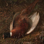Manner of David Gauld, RSA Pheasant amongst bracken