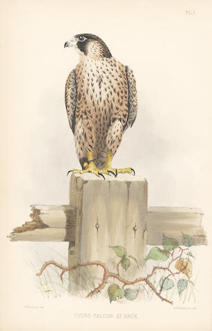 SALVIN (FRANCIS HENRY) and WILLIAM BRODRICK Falconry in the British Isles... Second Edition, Revised and Enlarged, 1873