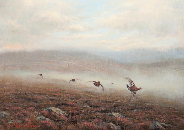Ian MacGillivray (British, born 1964) Pheasants flying low