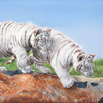 Pip McGarry - White Tiger Cubs, oil on canvas