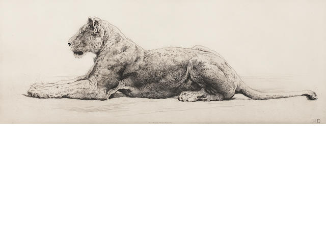 Herbert Dicksee  Etching of a lioness