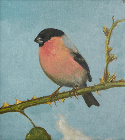 David Inshaw (British, 1943) Bullfinch 22.2 x 19.8 cm. (8 3/4 x 7 3/4 in.)