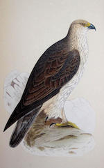 BREE (CHARLES ROBERT) A History of the Birds of Europe, Not Observed in the British Isles, 4 vol.