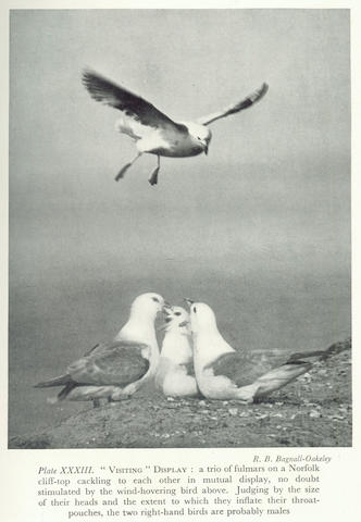 NEW NATURALIST FISHER (JAMES) The Fulmar, 1952; and others (95)