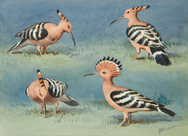John Cyril Harrison (British, 1898-1985) Hoopoes