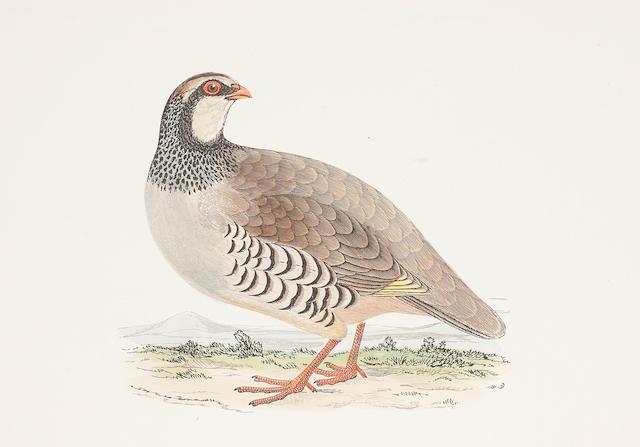 MORRIS (FRANCIS ORPEN) A History of British Birds, 6 vol.