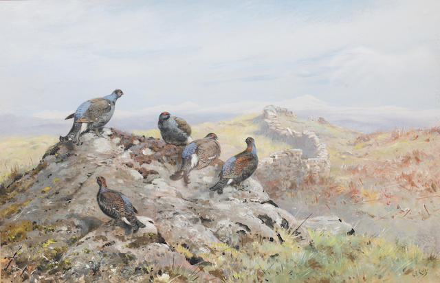 George Edward Lodge (British, 1860-1954) A group of black grouse on a rocky outcrop