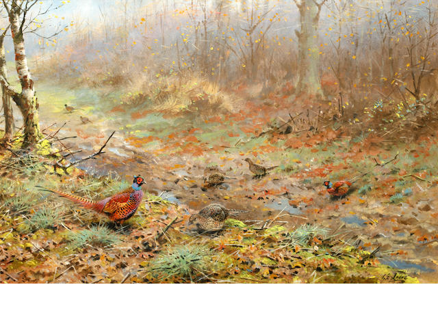 George Edward Lodge (British, 1860-1954) Cock and hen pheasants in a woodland clearing