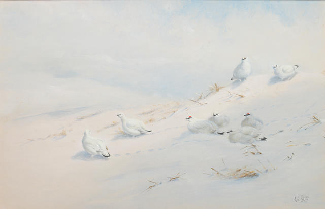 George Edward Lodge (British, 1860-1954) Ptarmigan on a snowy hillside