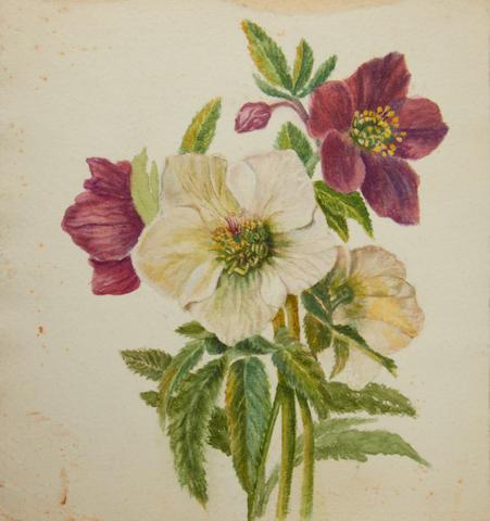 Caroline Worsley, 20th Century Album of South African botanical studies various sizes, (Qty).