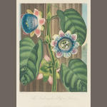 Dr Robert Thornton (Publisher) (London 1768-1837) Temple of Flora A later group of eight hand coloured aquatints from the series, entitled 'Quadrangular Passion Flower', 'Narrow-leaved Kalmia', 'Indian Reed', 'Blue Egyptian Waterlily', 'Artichoke Protea',  various engravers including Maddox, Stadler and Quilley, on wove, 240 x 180mm (9 1/2 x 7 1/8in)(I)  Dr Thornton - 5 framed hand coloured aquatints, 3 to come.  8