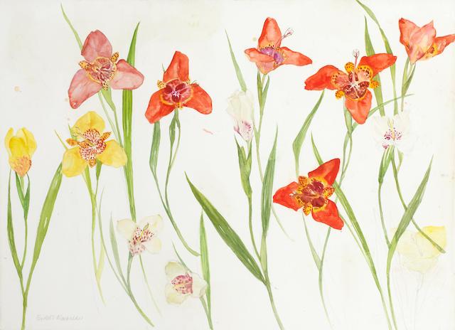 Dame Elizabeth Blackadder, OBE RA RSA RSW RGI DLitt (British, born 1931) Tigridia Paeonia 56.5 x 79 cm. (22 1/4 x 31 in.)