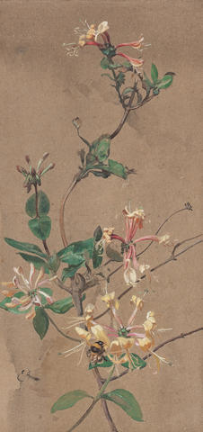 Edwin John Alexander RSA RSW RWS (British, 1870-1926) Honeysuckle and bee 37.5 x 17.75 cm. (14 3/4 x 7 in.)