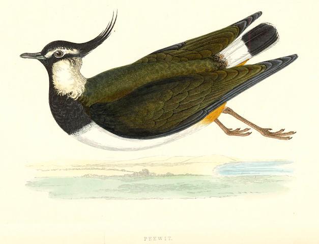 Morris's British Birds
