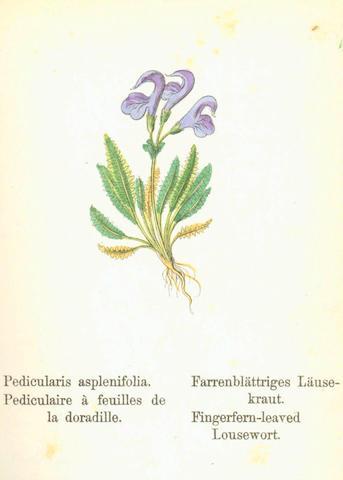 WEBER (JOHANN CARL) Die Alpen-Pflanzen Deutschlands und der Schweiz, 4 vol., 1880