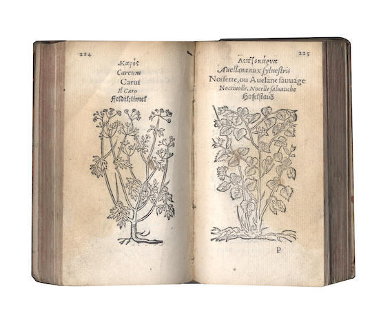 FUCHS (LEONHART) Plantarum Effigies, 1552; and another by Gesner (2)