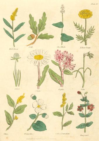 CULPEPER (NICHOLAS) Complete Herbal, 1823