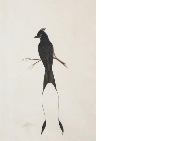 Four Company School studies of birds Calcutta, circa 1830(4)