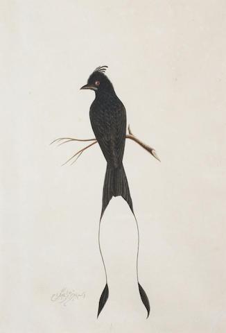 Four Company School studies of birds Calcutta, circa 1830(4)