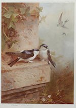 Archibald Thorburn (British, 1860-1935) Jay signed in pencil colour reproduction, pub. by W. Embleton, 1921 38 x 27cm, and two similar smaller signed prints, 1929 and 1930. (3)