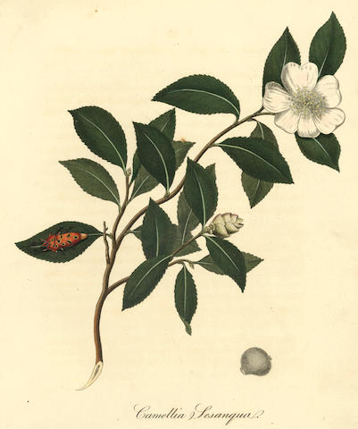 LETTSOM (JOHN COAKLEY) The Natural History of the Tea-Tree, with Observations on the Medical Qualities of Tea, 1799