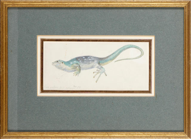Robert Kretschmer (German, 1818-1872) Three watercolours studies depicting lizards and fish, 8 x 17.5cm, together with a pencil study of plough horses, and a pencil sketch of a cow by James Ward. (5)