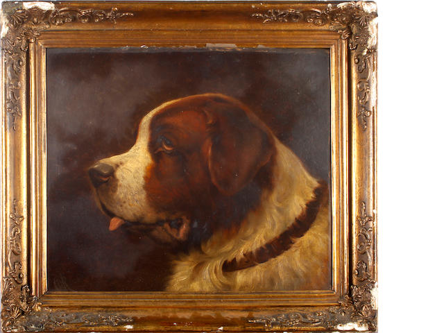 English School, 19th century Head study of a St Bernard