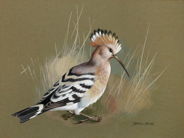 Basil Ede (British, born 1931) Study of a Hoopooe