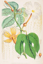 HOOKER (JOSEPH DALTON) Illustrations of Himalayan Plants, Chiefly Selected from Drawings Made for the late J.F. Cathcart, of the Bengal Civil Services