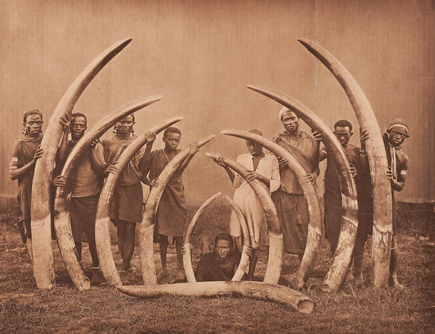 PHOTO OF HUNTERS AND ELEPHAND TUSKS: 9 Africans hold 11 tusks.
