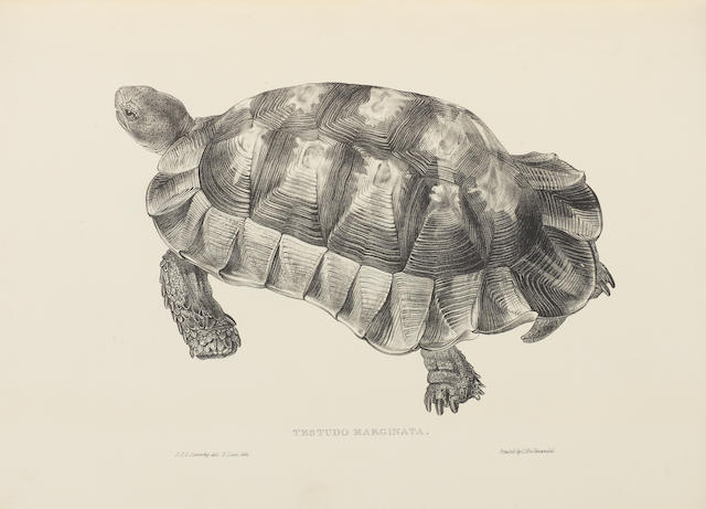 SOWERBY (JAMES DE CARLE) and EDWARD LEAR Tortoises, Terrapins, and Turtles Drawn from Life, 1872