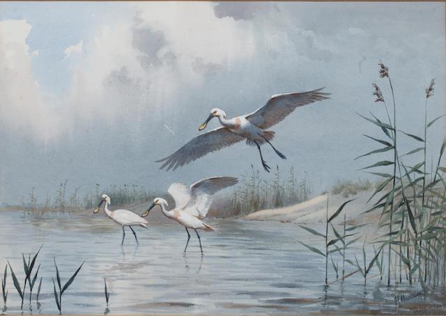 John Cyril Harrison (British, 1898-1985) Spoonbills, Blythburgh, 1954