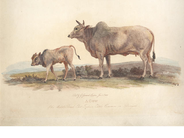 GARRARD (GEORGE) [Description of the Different Varieties of Oxen... in the British Isles]. 33 plates only, c.1799-1806
