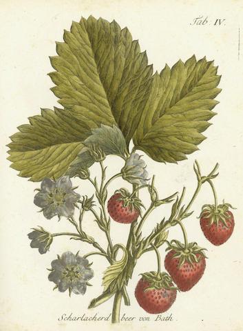 DUHAMEL DU MONCEAU (HENRI-LOUIS) Gesthcithce, 1775