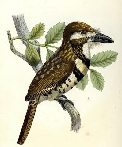 SCLATER (PHILIP LUTLEY) A Monograph of the Birds Forming the Tanagrine Genus Calliste, 1857