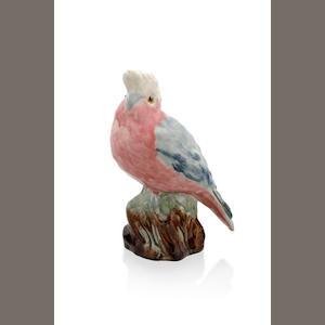 A pink galah perched on a branch by Grace Seccombe (c. 1880-1956)