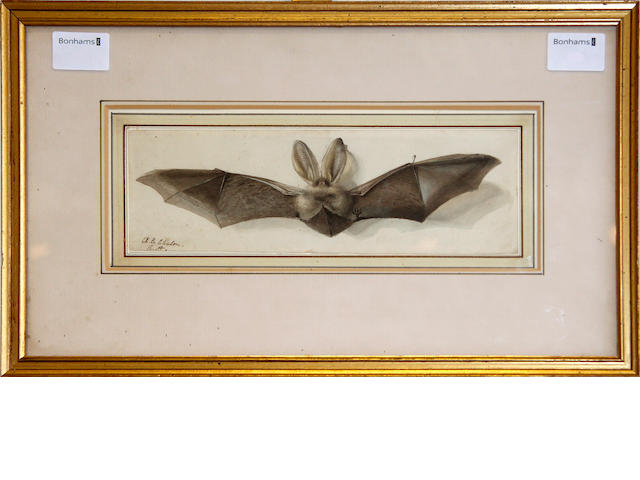 Alfred Edward Chalon, RA (British, 1780-1860) A Bat