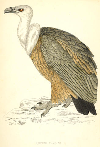 MORRIS (FRANCIS ORPEN) History of British Birds, 8 vol., [1888]