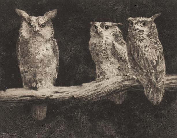 * Brightwell Owls
