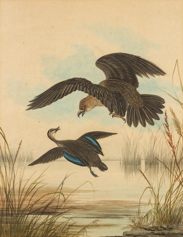 Neville Henry Cayley (Australian 1853-1903) Eagle attacking a duck