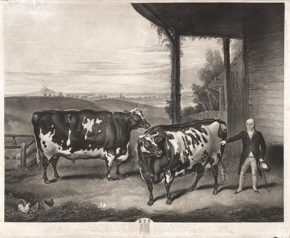 n engraving of a pair of Durham oxen